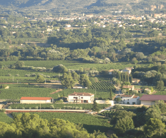 domaine-canta-rainette